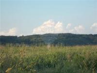 pozemek Viničné Šumice (Prodej pozemku 2735 m², Viničné Šumice)