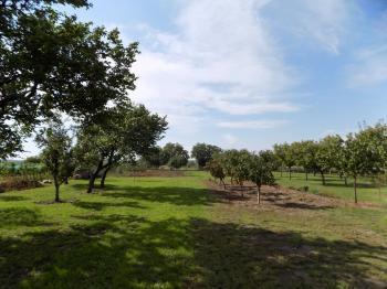 zahrada - Prodej pozemku 1520 m², Dolní Dunajovice