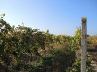vinice (Prodej komerčního objektu 1399 m², Břeclav)