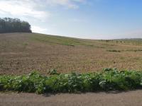 Prodej pozemku, 2268 m2, Kostelec