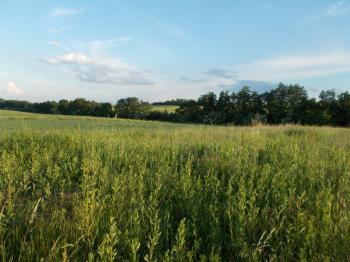 Prodej pozemku 4484 m², Rousínov (ID 163-N02722)