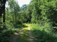 Prodej pozemku 8239 m², Kořenec