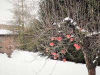 Zahradní zákoutí v zimě. - Prodej domu v osobním vlastnictví 520 m², Milevsko