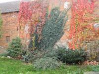 Romantické zákoutí na zahradě. (Prodej domu v osobním vlastnictví 325 m², Vodňany)