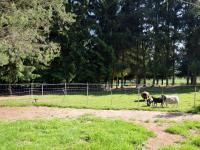 Pozemky okolo domu (Prodej zemědělského objektu 350 m², Černá v Pošumaví)