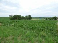 Pohled na stranu pozemku (Prodej pozemku 6962 m², Králova Lhota)