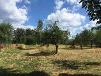 Prodej pozemku 7500 m², Mírová