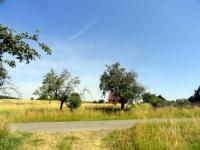 Prodej pozemku 1319 m², Všejany