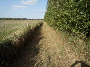 Prodej pozemku 75400 m², Borkovice