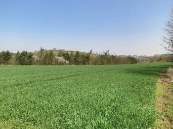 Pohled na pozemek - Prodej pozemku 10936 m², Praha 6 - Liboc