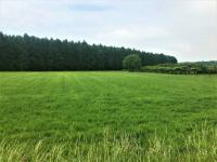 Prodej pozemku 3899 m², Provodov-Šonov
