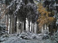 Lesy v okolí Mníšku pod Brdy - Prodej bytu 2+kk v osobním vlastnictví 51 m², Mníšek pod Brdy