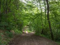 cesta k pozemku - Prodej pozemku 365 m², Záchlumí