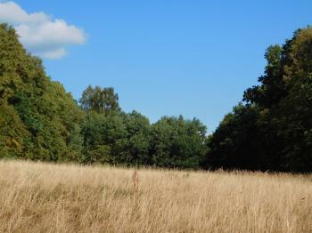 pohled na les - Prodej pozemku 7630 m², Skalice u České Lípy