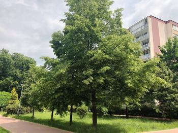 park za domem - Prodej bytu 4+1 v družstevním vlastnictví 84 m², Praha 9 - Letňany
