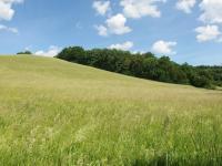 možnost odkupu lesa a pronajmutí luk (Prodej domu v osobním vlastnictví 363 m², Albrechtice)