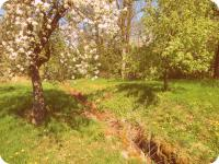 Potok protékající přímo zahradou (Prodej historického objektu 80 m², Včelákov)