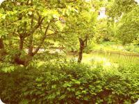 Výhled z ložnice do zahrady (Prodej chaty / chalupy, Mistrovice)