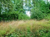 Zahrada (Prodej pozemku 2629 m², Lupenice)