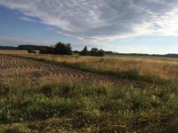Pohled na vlastní pozemek (Prodej pozemku 4194 m², Olbramov)