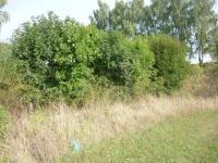 Prodej pozemku 10354 m², Sobotka