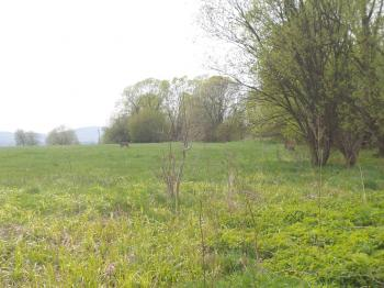 Prodej pozemku 2515 m², Dětřichov