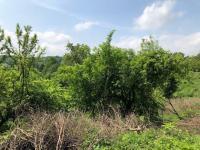Prodej pozemku 1089 m², Křižany