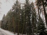 Les - pohled ze silnice - Prodej pozemku 37926 m², Chuchelna