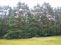 Prodej pozemku 14714 m², Petrovice