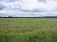 Prodej pozemku 945 m², Cheb