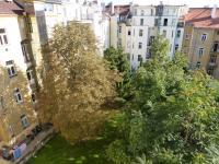Výhled z oken bytu do zeleně vnitrobloku a společné zahrady. (Pronájem bytu 2+kk v osobním vlastnictví 43 m², Praha 2 - Vinohrady)