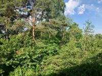 Zeleň v okolí - Prodej domu v osobním vlastnictví 118 m², Kostelec nad Černými lesy