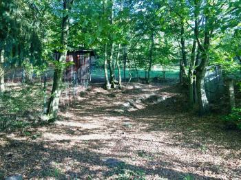 Velký přístupný pozemek - Prodej chaty / chalupy 60 m², Stříbrná Skalice