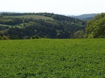 pozemek a pohled z něj do dálky - Prodej pozemku 8000 m², Radíč