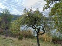 rybník - Prodej domu v osobním vlastnictví 324 m², Vodňany