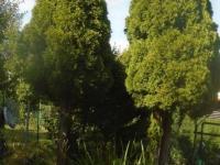Prodej chaty / chalupy 288 m², Odry
