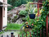Okolí domu - zahrada - Prodej bytu 3+1 v osobním vlastnictví 92 m², Liberec