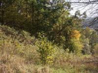Prodej pozemku 5114 m², Loket