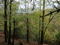 Prodej pozemku 2288 m², Štěchovice